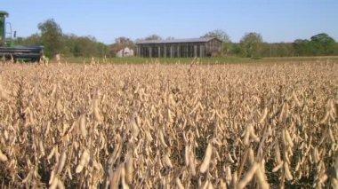 Combine Harvesting Soybeans — Stock Video