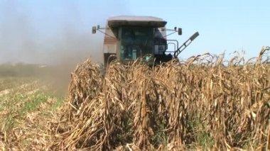収穫のトウモロコシを組み合わせる — ストックビデオ