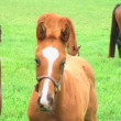 Foal Nursing — Stock Video #14493341