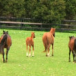Stock Video: horses running
