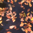 Drifting Leaves Time Lapse — Stock Video