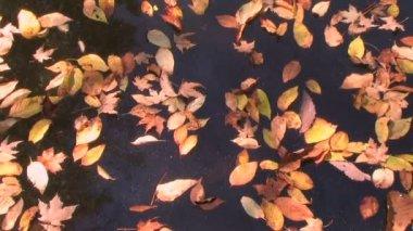 Deriva de lapso de tempo de folhas — Vídeo stock