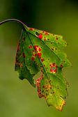 Leaf in autumn — Stock Photo