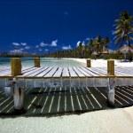 Mexico isla contoy — Stock Photo #12857488