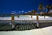 Mexico isla contoy — Stock Photo