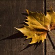 Stock Photo: Leaf in autumn in wood