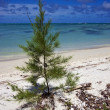 Bush in mauritius beach - Stock Photo