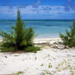 Bush in a beach in mauritius — Stock Photo
