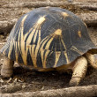 Stock Photo: Tortoise in nosy be