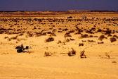 Sahra Çölü — Stok fotoğraf