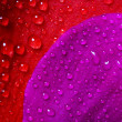 Stock Photo: Red and violet texture