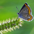Butterfly grey orange — Stock Photo