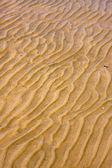 岸纹理和弯曲的线在里约德拉普拉塔 — 图库照片