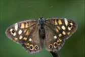 Grey orange butterfly on a brown branch — Foto Stock