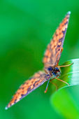 Hnědý oranžový motýl na — Stock fotografie