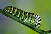 Papilionidae in a green tree — Stock Photo