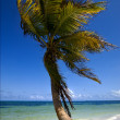 Stock Photo: Coastline in caraibbien blue lagoon sikaan