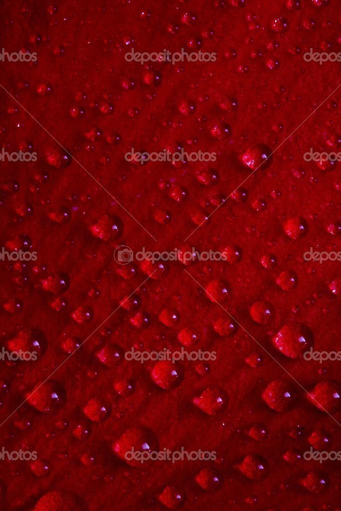 红色的玫瑰花瓣和水珠纹理
