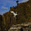 The side of sea gull  flying - Stok fotoğraf