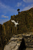 The side of sea gull flying — Stock Photo