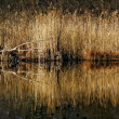 Marshy abstract   in the north of italy - Stock Photo