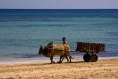Dustman lagoon worker animal — Stock Photo