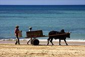 Hand cart dustman lagoon — Stock Photo