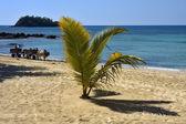 Hand cart palm dustman branch hill lagoon — Stock Photo