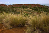 Hill bush plant lagoon — Stock Photo