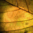 Macro abstract of a green yellow leaf — Stock Photo #26988741