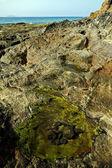 Musk musk pond beach in lanzaro — Stock Photo