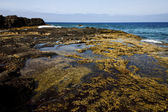 Rock stone coastline and summer in lanzarote spain — Stock Photo