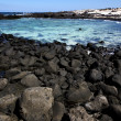 In lanzarote spain   pond  coastline and summer — 图库照片