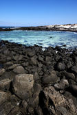 In lanzarote spain pond coastline and summer — Stockfoto