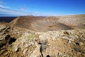 In los volcanes volcanic timanfaya rt flower bush — Stock Photo
