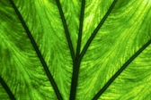 Abstract background macro close up of a green — Stock Photo