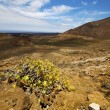 In los volcanes volcanic plant flower bush — Stock Photo