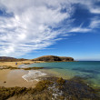 Beach  water  coastline and summer in lanzarote spain — Stok fotoğraf