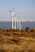 Africa wind turbines and the sky in the isle — Stock Photo