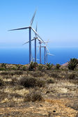 Africa wind turbines the isle of lanzarote spain — Stock Photo