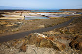 Salt in lanzarote spain musk p — Stock Photo
