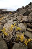 Flower abstract pond water coastline salt in lanzarote — Foto de Stock