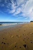 Footstep musk pond coastline and summer — Foto de Stock