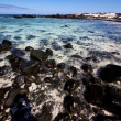 Sky light  beach water  in lanzarote  isle foam rock  landscape — ストック写真