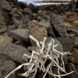 Branch abstract pond water coastline salt in  lanzarote spain — ストック写真