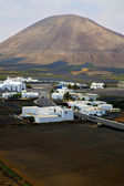 City cultivation home viticulture lanzarote — Stock Photo