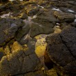 Lanzarote  isle foam rock spain — ストック写真