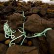 Rope sky  cloudy  beach  light  water  in lanzarote — ストック写真