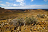 Flower hill and summer lanzarote spain plant — Stock Photo