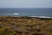Surfovat pobřeží lanzarote ve Španělsku pižmo rybniční vody — Stock fotografie